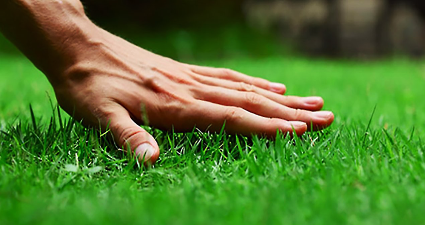 how to care for your new sod lawn on long island