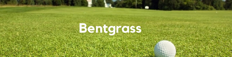 Bentgrass Header