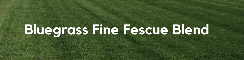 Bluegrass Fine Fescue Blend Header