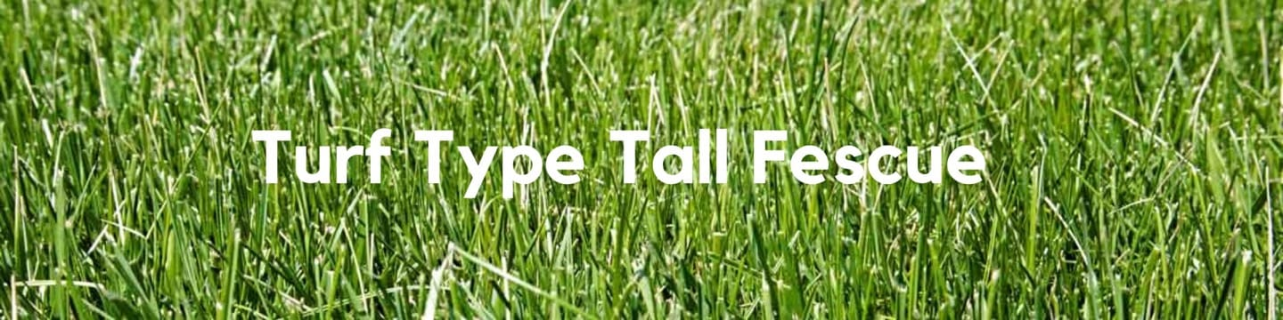Turf Type Tall Fescue Header